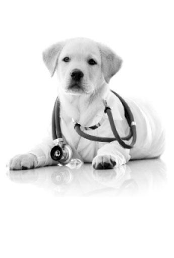 International Journal of Veterinary and Animal Medicine